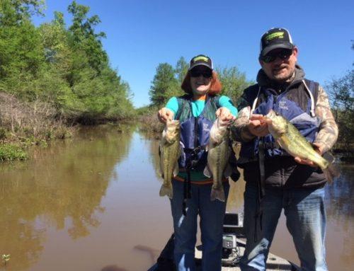 fishing state toledo bend