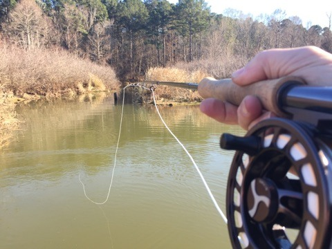 Toledo bend fly fishing guide mudfish adventures on lake for Toledo bend fishing report