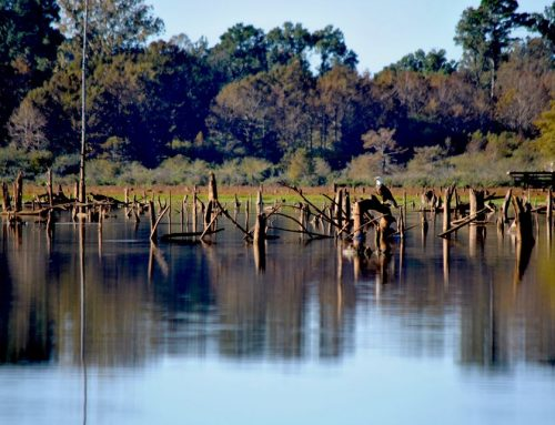 Mudfish Adventures Fishing Report – October 24, 2019