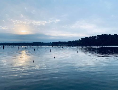 Mudfish Adventures Fishing Report – November 11, 2019